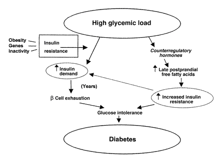 Potential mechanisms whereby high-glycemic-load diets could increase risk of type 2 diabetes.jpeg