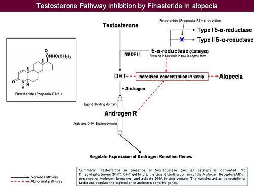 5 Alpha Reductase Inhibition Jpeg